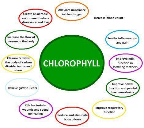 chlorophyll hate wheatgrass try chlorella : chlorophyll diagram - findchart.co
